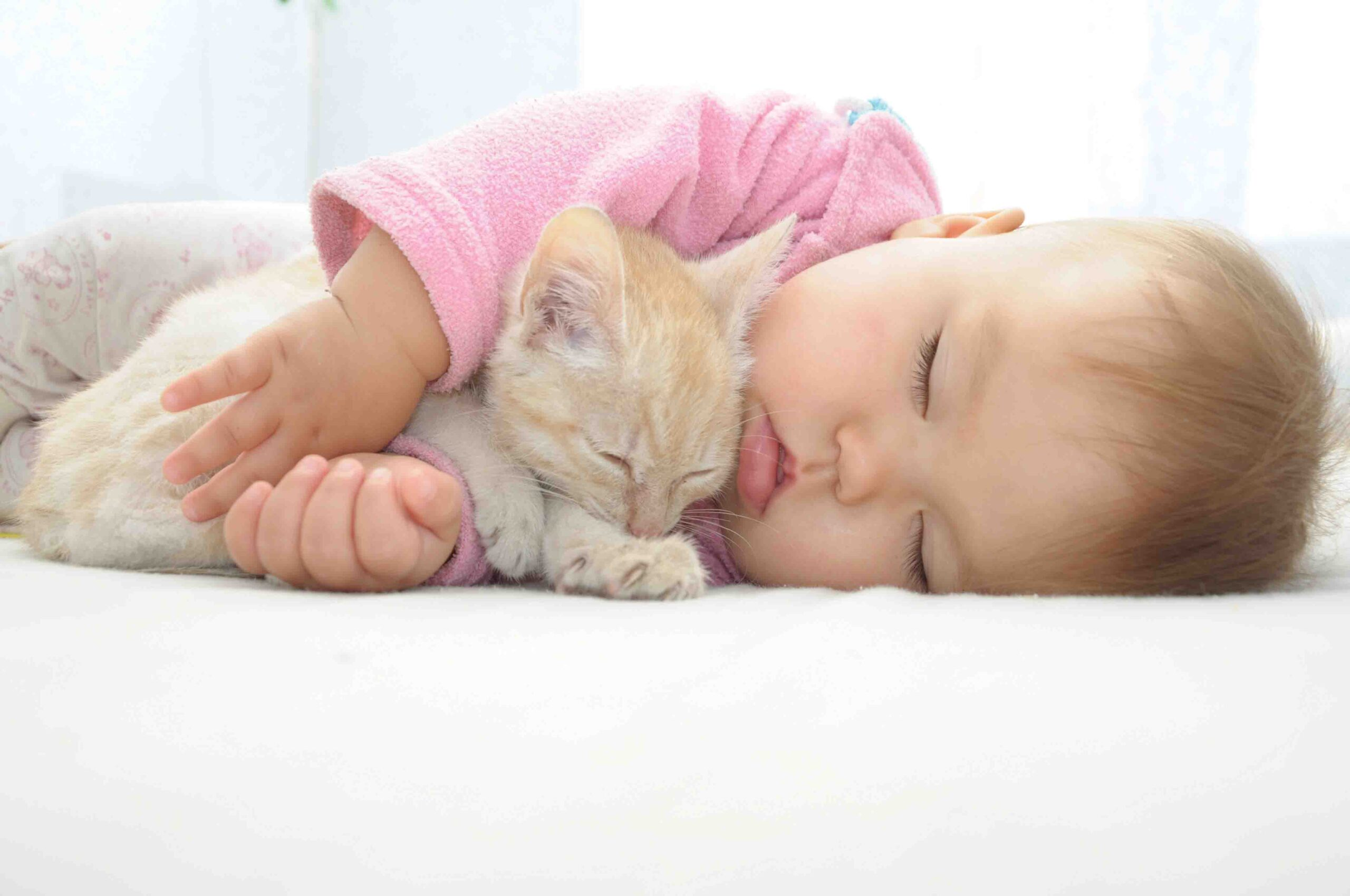 Kittens and babies