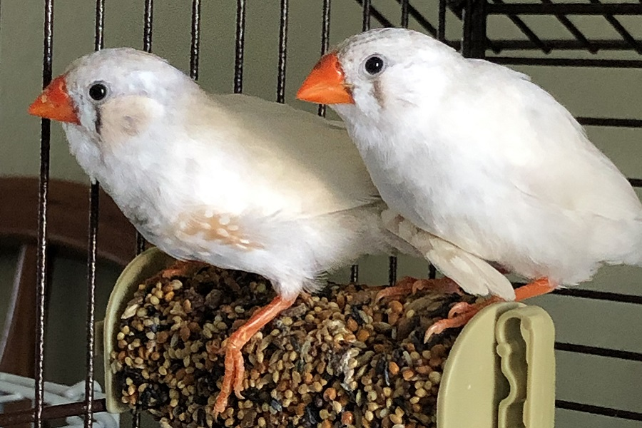 Happy 1st birthday to our baby finches!